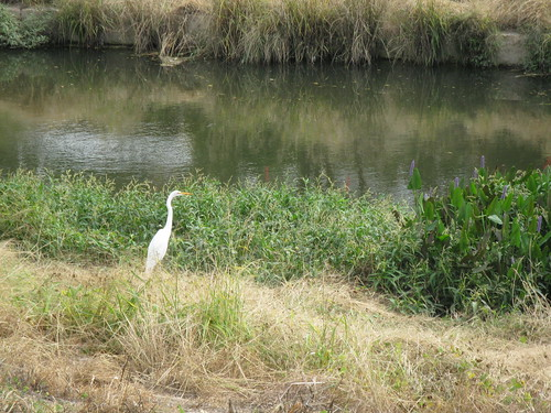bird on river