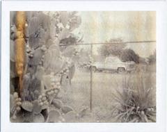 Phoenix, AZ (moominsean) Tags: arizona cactus phoenix polaroid desert grain pickup instant 190 ndfilter 100sepia