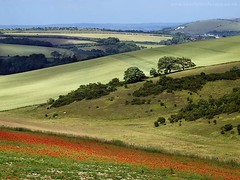South Downs (Yaroslav Staniec) Tags: uk greatbritain summer england colour walking landscape photography countryside scenery unitedkingdom britain outdoor scenic olympus hills poppies gb eastsussex poppiesfield landscapepictures yaroslavstaniec