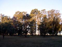 Ni casas, ni edificios... Tan sólo, árboles. (Petite.Chateau) Tags: sky tree sol arbol ground pasto cielo troncos csped grallamadrid