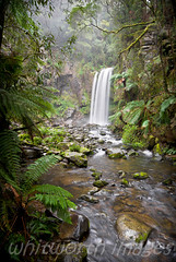 Hopetoun Falls (whitworth images) Tags: mist motion blur green nature wet water creek forest river landscape outdoors waterfall nationalpark rainforest stream scenic peaceful australia scene victoria falls vic serene flowing ferns cascade mossy damp otways moist treeferns otwayranges hopetounfalls greatotwaynationalpark
