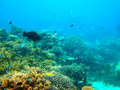The Great Barrier Reef - 146