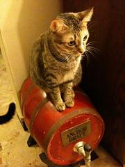 Tiga on the beer barrel
