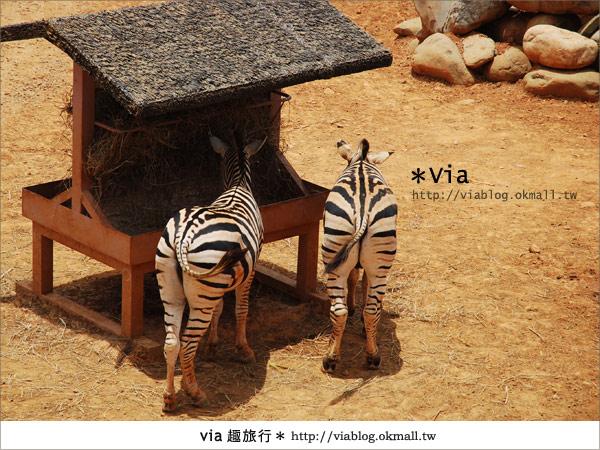 【新竹住宿】來去和動物住一晚~關西六福莊生態渡假旅館20