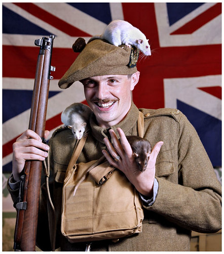 rats in trenches. rats. Life in the Trenches