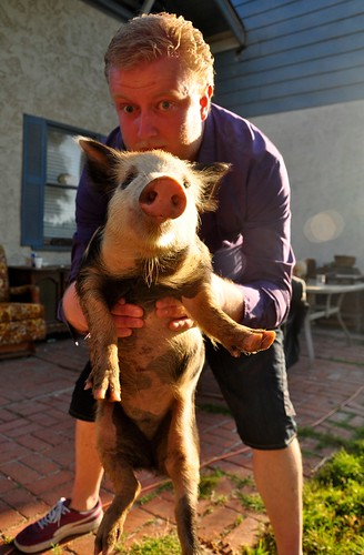 Mikkel and Pig at the Tea Farm
