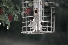 (hellow im morgan) Tags: flowers food plant bird bokeh birdfeeder cage