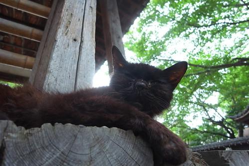 Today's Cat@2010-08-14
