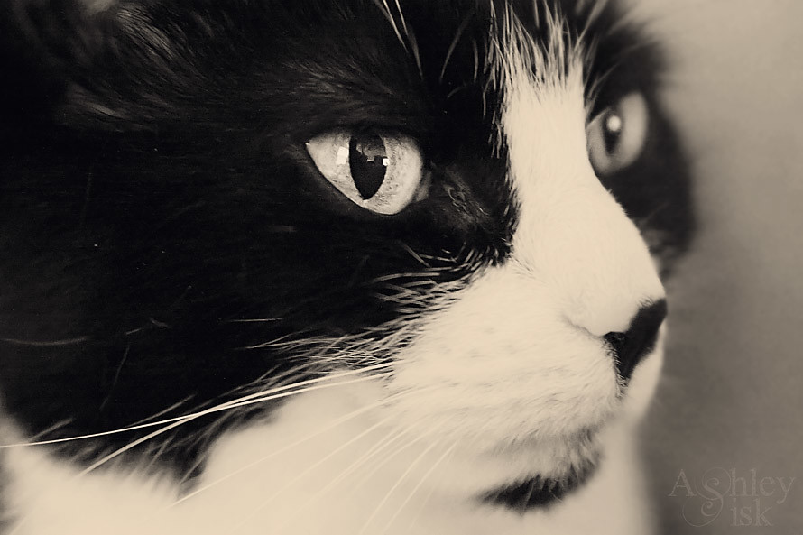 Kitty Paw Green Eyes BW-RS