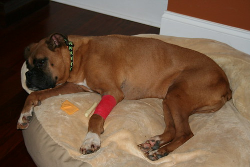 What Can I Give My Dog Has Kidney Disease