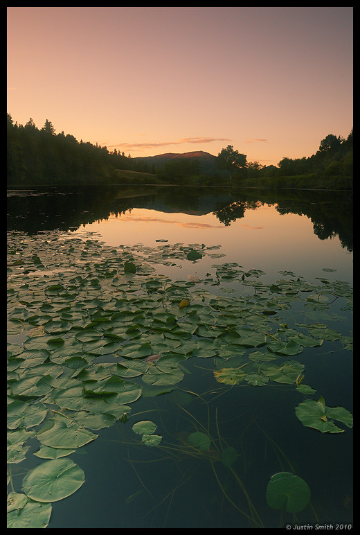 Long Pond and Lily Pads
