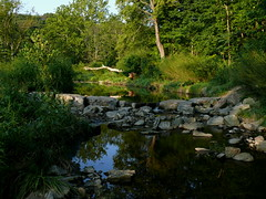 the stream at dusk (leafy) Tags: trees urban water stream pittsburgh restoration recovery frickpark ninemilerun sustainability ecosystem nmrwa nativehabitatrestoration ninemilerunorg