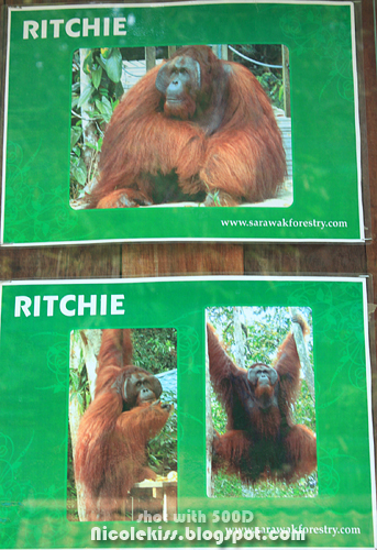 gentle giant ritchie
