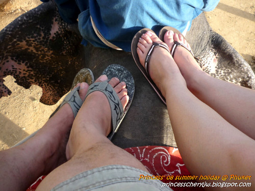 Elephant Trekking & Safari 20