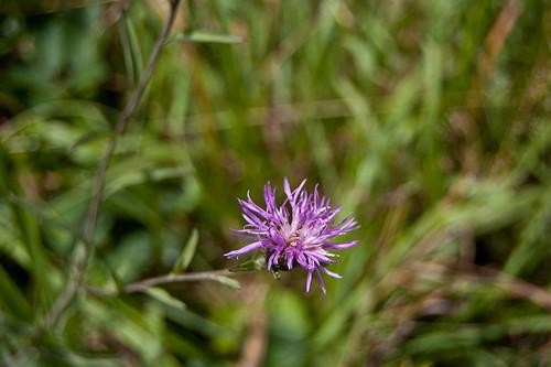 Bokeh floral