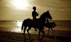 Carreras Sanlucar 1 (M. Rogelio G.) Tags: horses beach race canon caballos playa agosto 5d carreras 2010 mkii sanlúcar sanlucar barrameda 24105l