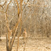 Hidden Impalas - Selous Game Reserve, Tanzania