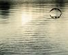 Flight Path (Catching Magic) Tags: lake bird nature water tiraudan shag nilkon