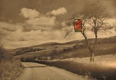 Hugh Hughes: Red Bird in a tree