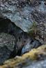 Værøy  |  Lofoten  |  Norway (r e n e c o r t i s) Tags: world summer mountains birds norway fauna seasons stones gulls geography lofoten fjell nordland måstad værøy birdcliffs vaeroy varoy mostad