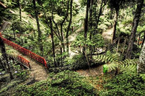 Tropical garden. Madeira. Jardim Tropical