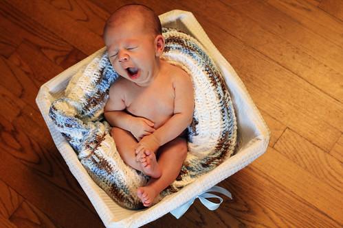 in brown basket landscape yawning