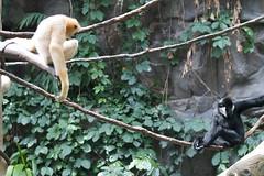 MNZoo 511 (tfangel) Tags: animals zoo minnesotazoo tropicstrail