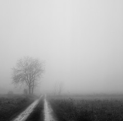 Foggy afternoon (Fabrizio Zago - Photography & media) Tags: italien trees blackandwhite bw italy tree 120 6x6 tlr film nature field fog alberi analog mediumformat delete5 delete2 countryside blackwhite europa europe italia nebel natural foggy meadow meadows wiese save3 delete3 save7 natura save8 delete delete4 save save2 bn campagna piemonte save9 save4 squareformat land campo fields save5 save10 analogue save6 nebbia albero landschaft piedmont baum bianconero biancoenero hof twinlensreflex yashicamat campi yashicamat124g twinlens mittelformat neblig schwarzweis bumen medioformato blackwhitephotos tettineirotti biottica fabriziozago