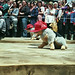 MMF2010 - AAA005 gift dogs