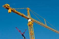 Yellow Crane #2