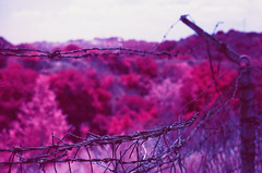 IR Barbed Wire II (LeandroF) Tags: minoltasrt101 minolta 45mmf2rokkor film camera e6 chrome slidefilm fpp infrared infrachrome ir thedarkroomlab 35mm slr yellow12filter