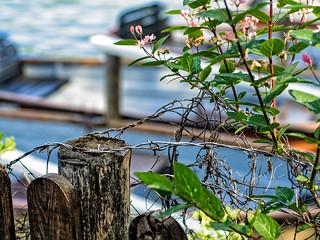 Fenced Boats
