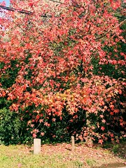 Otoño (markosr74) Tags: tonos naturaleza otoño hojas