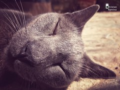 Sleeping (cramirez.photography) Tags: sleeping peace phone mobile iphone photography relaxed relax relaxtime sleep wild animal animals gatos kitten kitty cats cat