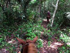 Riding in Jungle Cayo Belize by furtwangl, on Flickr