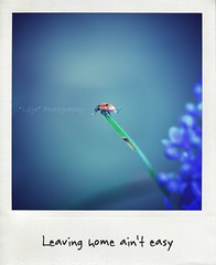 #2 (*Les Hirondelles* Photography) Tags: life blue italy abstract flower colour detail macro texture home nature leaves canon polaroid leaving italian poetry italia dream bugs ladybug minimalism italiano reverie sogno coccinella macronature digitalpolaroid goldwildlife macrodetail tripleniceshot leshirondellesphotography