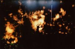 hand forest (Adele M. Reed) Tags: light shadow film 35mm fence hand kodak wave 200 passageway 99pcamera concordeslimline