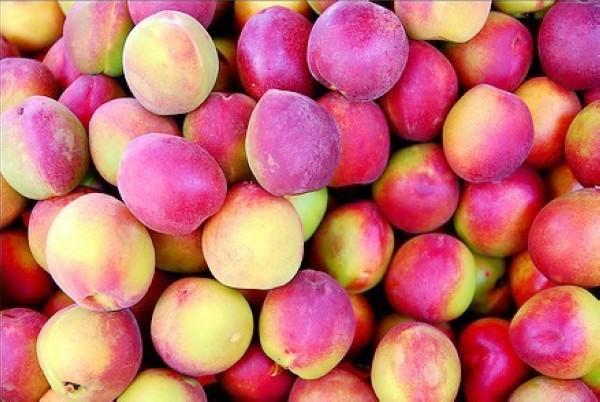 fruitandcharacter11