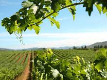 Río Negro: Firman convenios para el sector vitivinícola por cinco millones de pesos