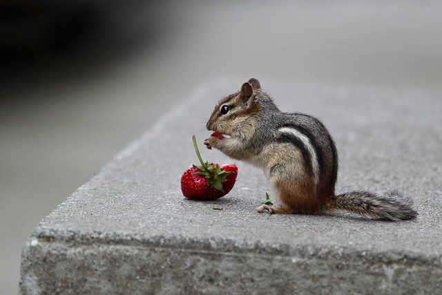 Sneaking a snack