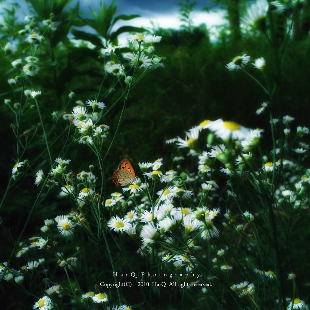 Little Butterfly *
