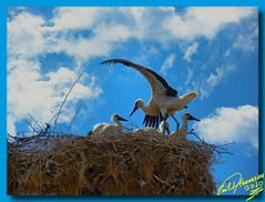 Stork's nest .... 1xP HDR (Emil9497 Photography & Art) Tags: panasonic greece drama soe stork supershot storksnest abigfave anawesomeshot avianexcellence theunforgettablepictures unforgettablepicture dmczx1 mygearandme ringexcellence