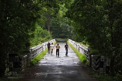 Bridge of friends..:-) (www.senyphotography.com Out for few days..:-() Tags: bridge india forest canon eos kerala f4 kichu vazhachal dpk nachu athirappilly 24105l seny 550d naseef