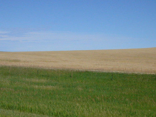 South Dakota Wheat Plain