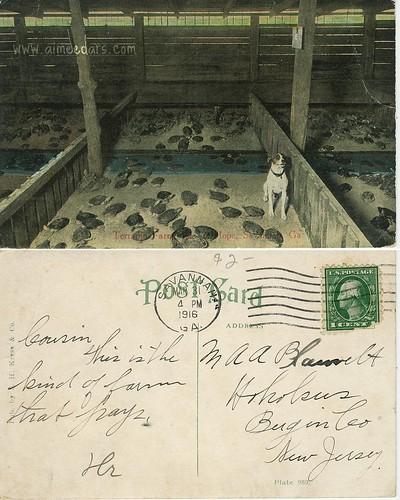 POSTCARD: Terrapin Farm (1916)