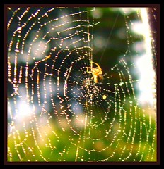 The golden spider (Yasmin de light) Tags: sunlight nature water beauty glitter spider drops rainbow spiders web dream sparkle dew rainbows waterdrops spidersweb webs dreamcatcher bej abigfave dreamcatching