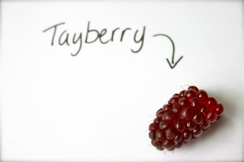 Tayberry