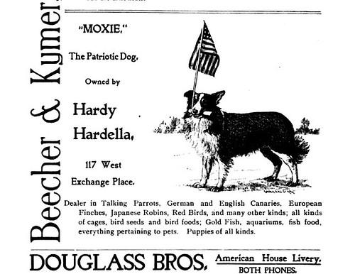 Moxie the dog Ad