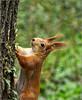 A kis érdeklődő (mega4000) Tags: hungary budapest olympus zuiko magyarország mókus crystalaward invitedphotosonly dslrfotoamatőrésprofifotósokközössége