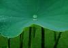 Tiny Rain Drop 〔My Umbrella〕 (h orihashi) Tags: flower macro nature japan pentax drop 日本 花 pictureperfect k7 coth flickrsbest bej impressedbeauty crystalaward infinestyle citrit excellentphotographerawards theunforgettablepictures overtheexcellence awesomepictureaward cherryontopphotography rubyphotographer newenvyofflickr pentaxk7 natureskingdom